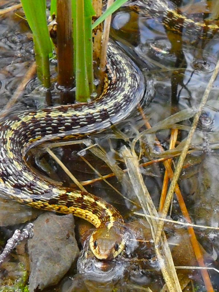garder.snake