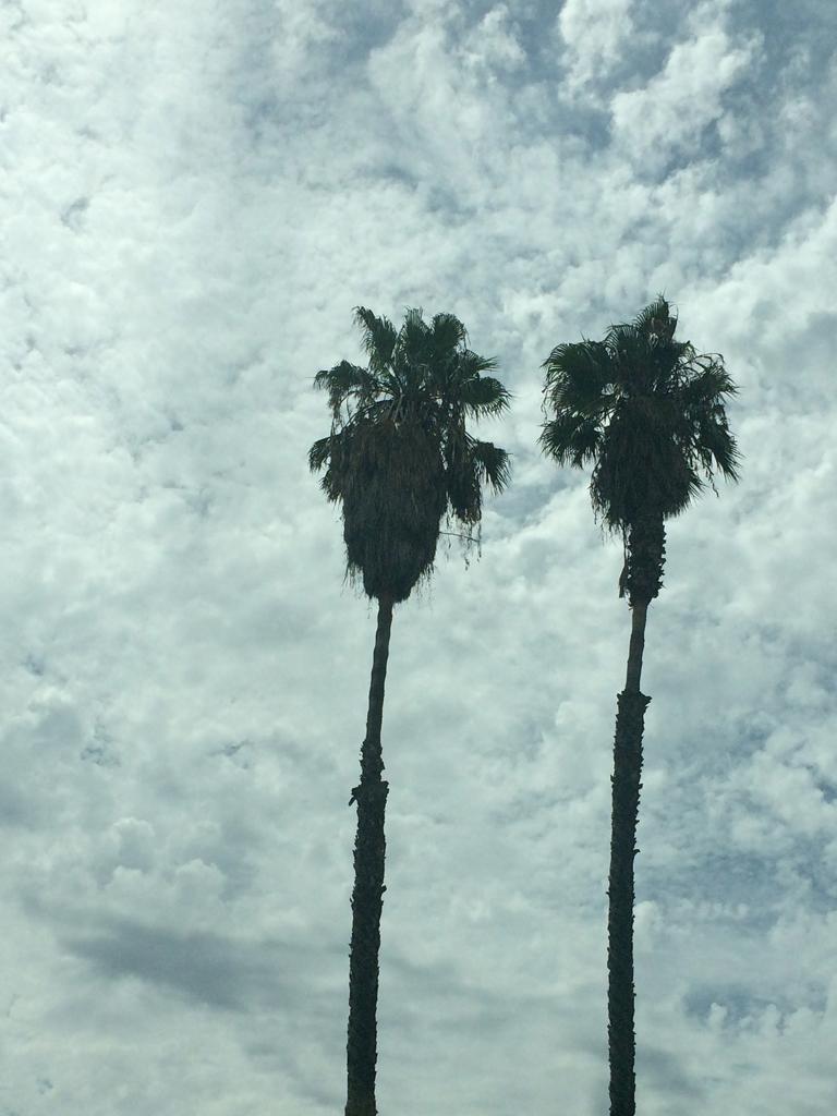 palm.trees