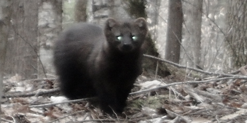 fisher.cat