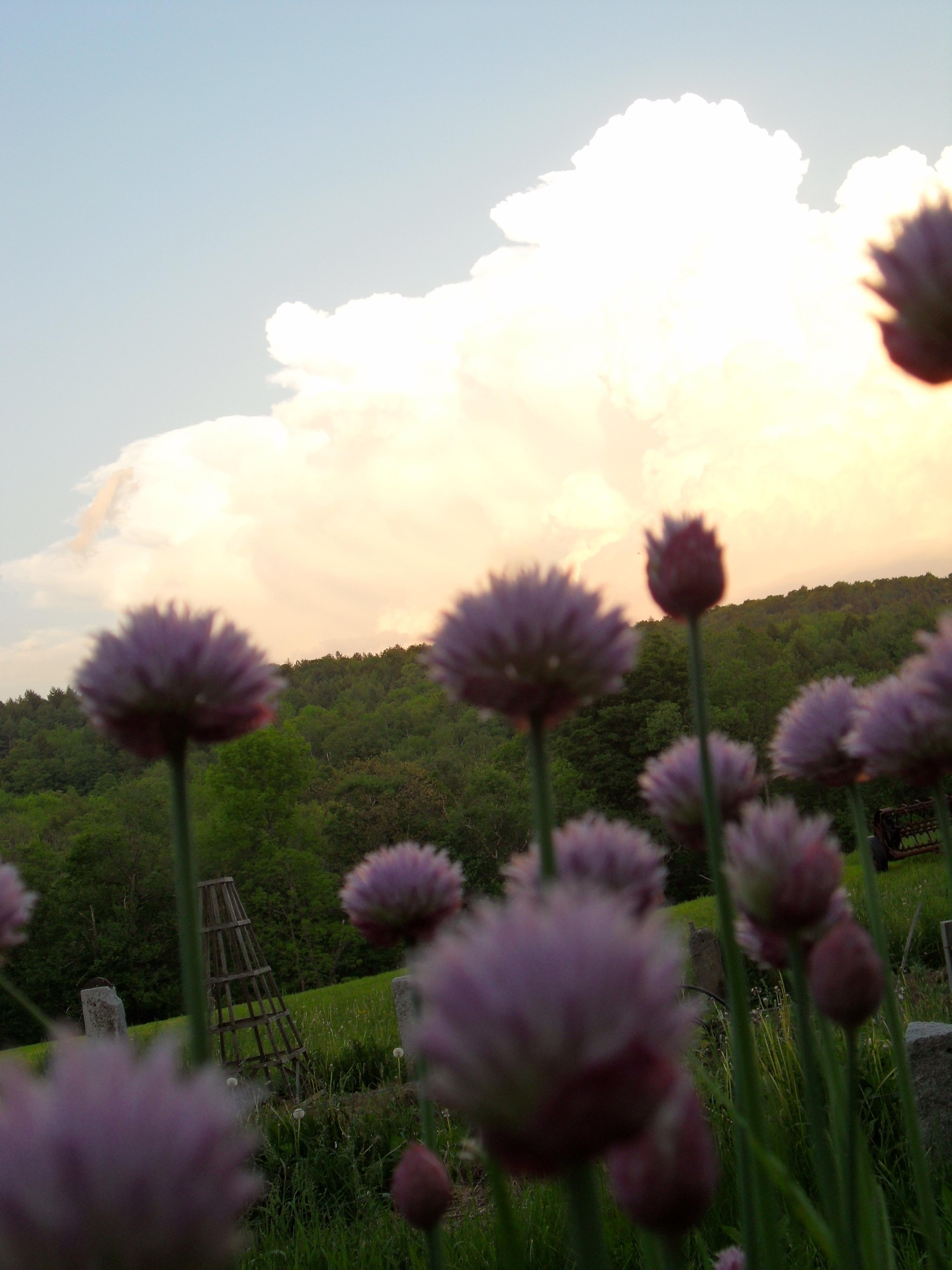 summer.clover